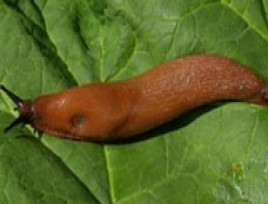 Anti limaces naturel - Desherbant naturel puissant ...