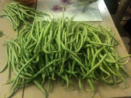 augmenter vos récoltes potager