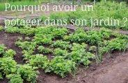Avantages d'avoir un potager dans son jardin