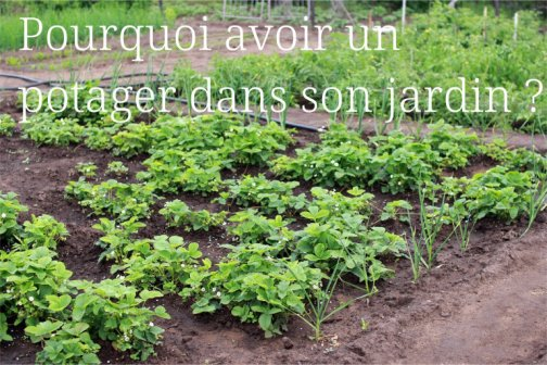 avantages potager jardin