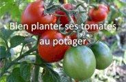Bien planter ses tomates