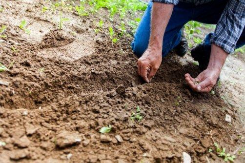 Bien pr parer sa terre au jardin potager astuces pratiques - Comment retourner la terre du jardin ...