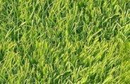 comment avoir une belle pelouse 0