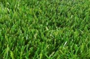 Comment faire ou avoir une belle pelouse