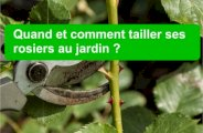 Comment tailler les rosiers ?