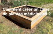Créer un carré de plantes médicinales