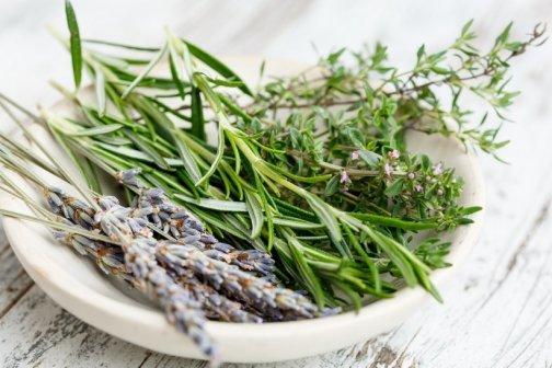créer carré plantes médicinales