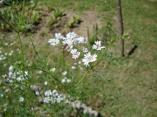 créer prairie fleurie jardin