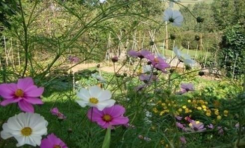 créer prairie fleurie