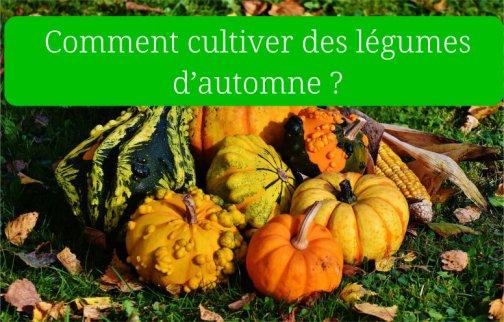 cultiver légumes automne