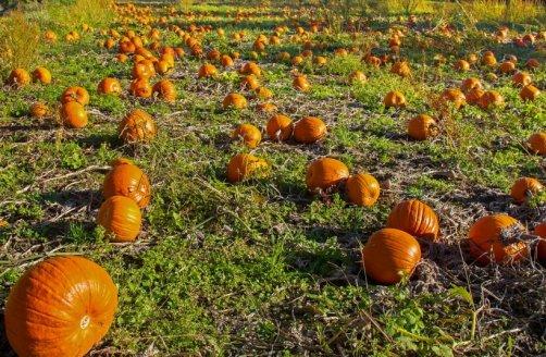 légumes automne potager