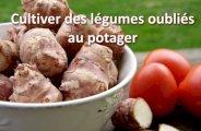 Cultiver des légumes oubliés au potager