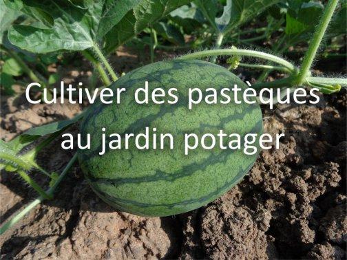 cultiver pastèques jardin potager