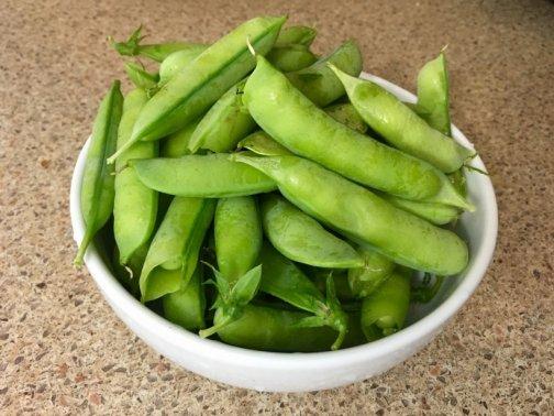 cultiver petits pois jardin potager