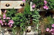 Cultiver un potager sur balcon