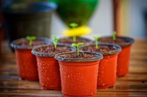 cultiver potager sur balcon