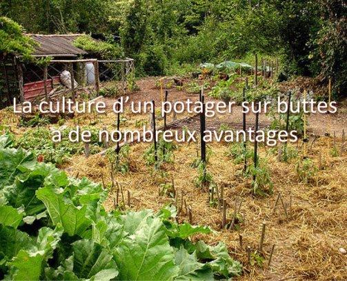 cultiver potager sur buttes