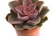 des plantes sans exigeances 0