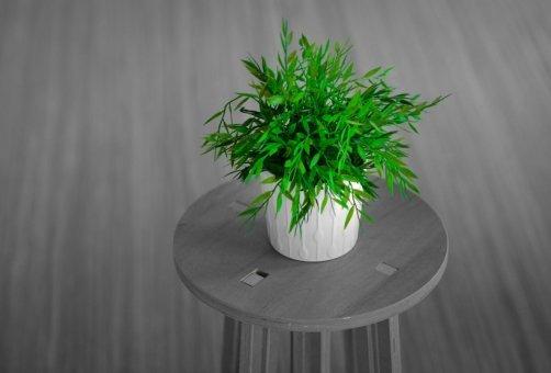 entretenir plantes intérieur