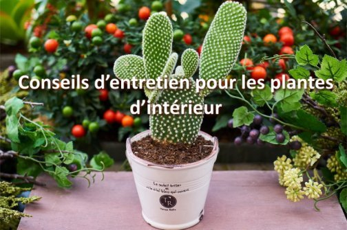 entretien plantes d'intérieur