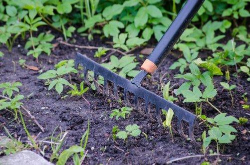 Entretenir ses outils de jardin astuces pratiques for Entretenir jardin