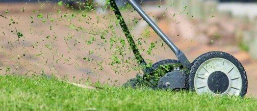 faire pousser pelouse