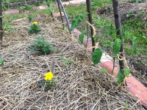 Faire un compost dans le jardin astuces pratiques - Faire fuir les oiseaux dans un jardin ...
