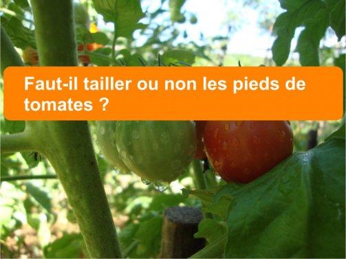 faut-il tailler les tomates