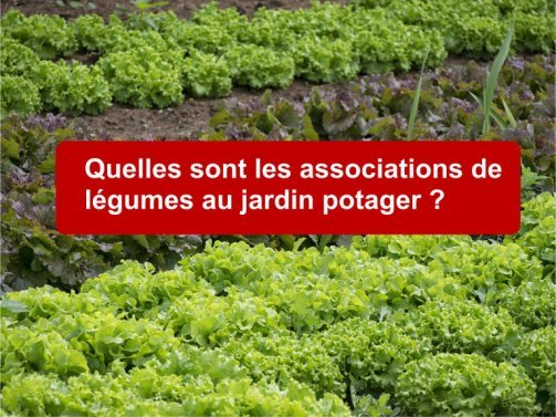 Les associations de l gumes au jardin potager astuces pratiques - Association de legumes au potager ...