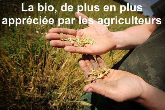 agriculture bio bien rentable