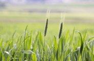 Les bienfaits des engrais verts au jardin