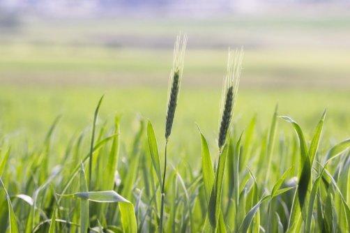 bienfaits engrais verts jardin