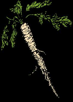 cultiver plantes vivaces