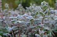 Protéger vos plantes de l'hiver