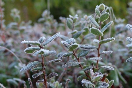 protéger plantes hiver