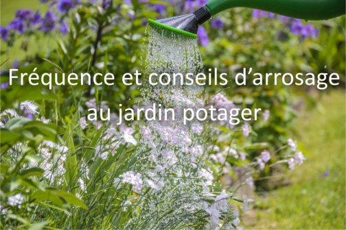 Quand et comment arroser son jardin potager ?