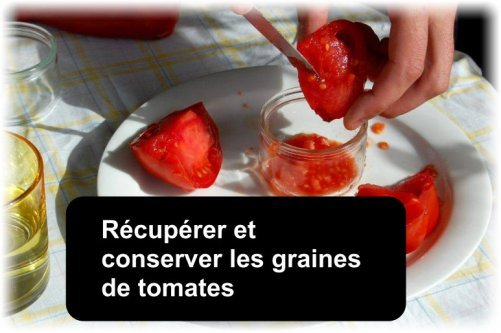 recuperer conserver graines tomates