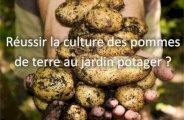 Réussir la culture des pommes de terre au jardin potager