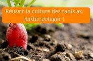 Réussir la culture des radis au jardin potager