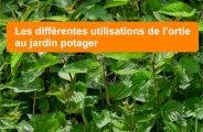 Utilisations de l'ortie au jardin potager