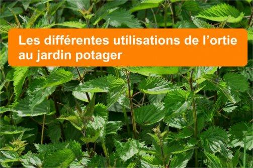 utilisations ortie jardin potager