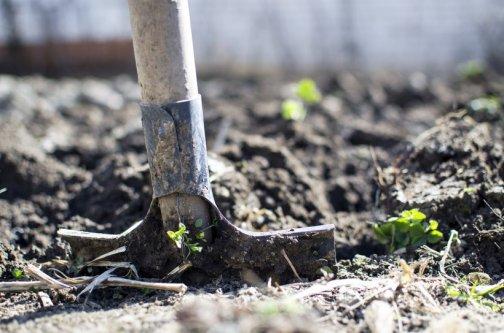 cendre jardin potager