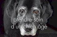 5 astuces pour prendre soin d'un chien âgé