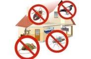 Comment se débarrasser des nuisibles de la maison ?
