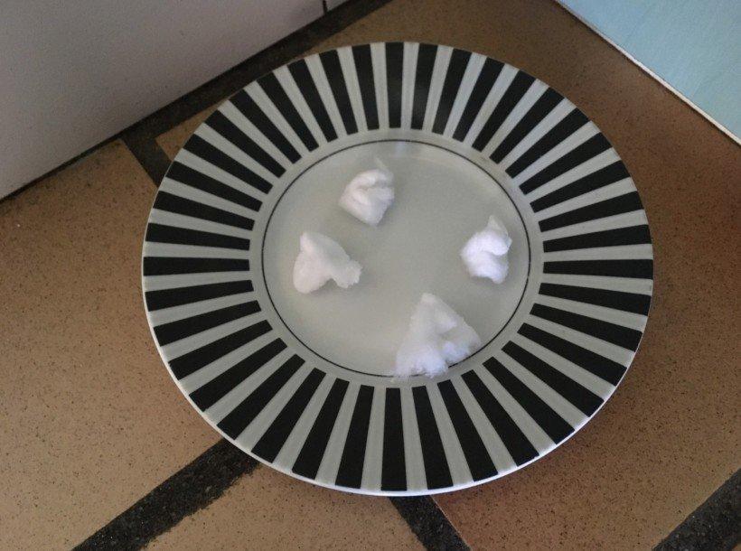 coton repulsif rats souris
