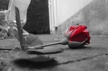 aimer ou etre amoureux 1