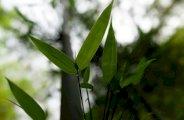 Le bambou vous aide à avoir une belle peau