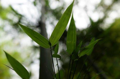 bambou avoir une belle peau