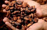 Le beurre de cacao pour la peau et les cheveux