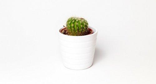 cactus-peau-beauté